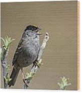 Goldencrowned Sparrow Wood Print