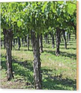 Grape Vines In A Row Wood Print