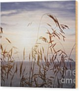 Grass At Sunset Wood Print