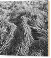 Grass In Black And White Wood Print