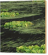 Grasses And Lilies In Beaver Pond Wood Print