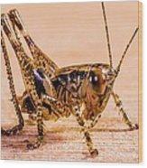Grasshopper Wood Print