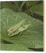 Grasshopper Mating On Grass Leaf Wood Print