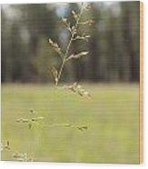 Grassy Meadow Wood Print