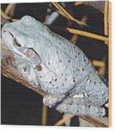 Gray Treefrog Wood Print