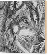 Gray Wolf Watches And Waits Wood Print
