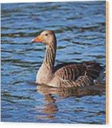 Graylag Goose Wood Print
