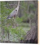 Great Blue Heron (ardea Herodias Wood Print