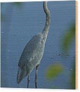 Great Blue Heron I Wood Print