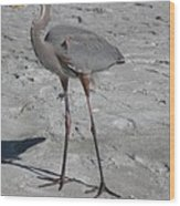 Great Blue Heron On The Beach Wood Print