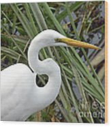 Great Egret Close Up Wood Print