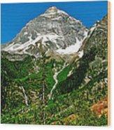 Great Glacier Trail In Glacier Np-british Columbia Wood Print