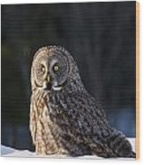Great Gray Owl Pictures 789 Wood Print