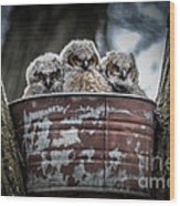 Great Horned Owl Chicks Wood Print