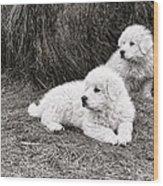 Great Pyramise Pups Wood Print