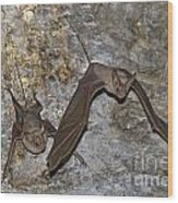 Greater Mouse-tailed Bat Rhinopoma Microphyllum Wood Print
