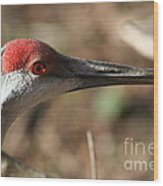 Greater Sandhill Crane Wood Print
