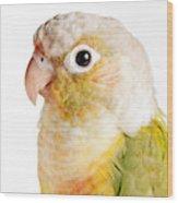 Green-cheeked Conure Pineapple P Wood Print