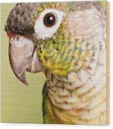 Green-cheeked Conure Pyrrhura Molinae Wood Print