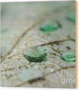 Green Drops Wood Print