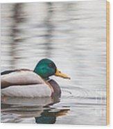 Green-headed Duck Wood Print