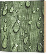 Green Leaf Abstract With Raindrops Wood Print by Elena Elisseeva