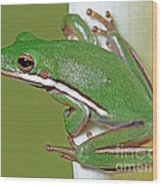 Green Treefrog Wood Print
