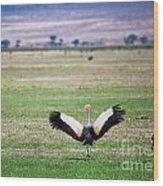 Grey Crowned Crane. The National Bird Of Uganda Wood Print