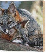 Grey Foxes Wood Print
