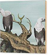 Griffon Vultures Wood Print