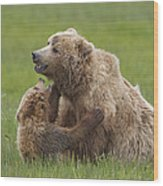 Grizzly Bear Playing With Cub Lake Wood Print