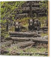 Grizzly Triplets After Rain Wood Print