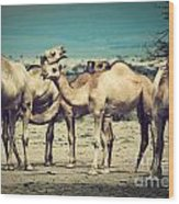 Group Of Camels In Africa Wood Print