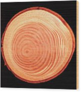 Growth Rings Of Larch Tree Wood Print
