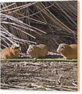 Guinea Pig Livestock At Lake Titicaca Peru Wood Print