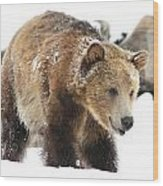 Happy Grizzly Bear Wood Print
