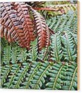 Hapu'u Frond Wood Print