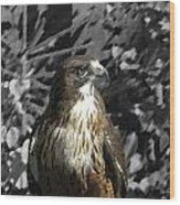 Hawk Of Prey Wood Print