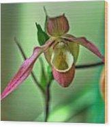 Hdr - Flower Wood Print