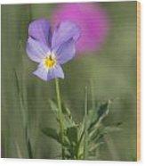Heart's Ease Wild Viola Wood Print