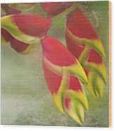 Heliconia Rostrata Wood Print