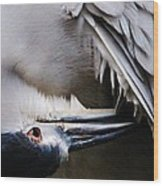 Heron Feathers Wood Print