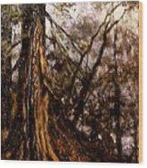 Hillside Ancient Wood Print