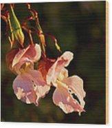 Himalayan Balsam Wood Print