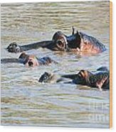 Hippopotamus Group In River. Serengeti. Tanzania Wood Print