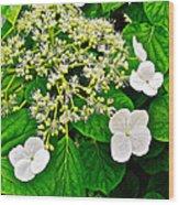 Hobblebush On Mackinac Island-michigan Wood Print
