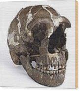 Homo Neanderthalensis Cranium (tabun 1) Wood Print