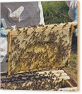 Honeybee Brood Frame Wood Print