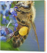 Honeybee On California Lilac Wood Print