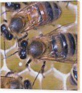 Honeybees On Honeycomb Wood Print